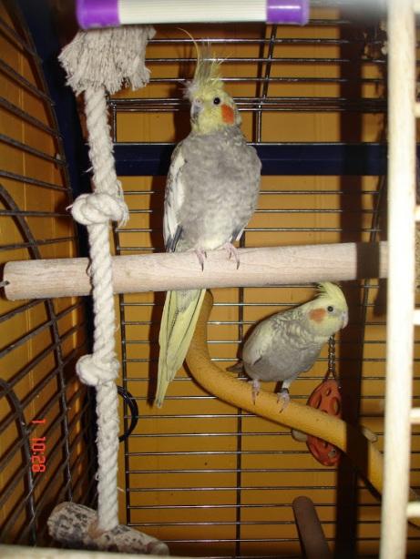 deux oiseaux cage